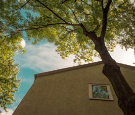 Les règles applicables aux arbres, aux arbustes et aux arbrisseaux